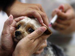 Нужна ли вакцина против чумы и если да, то кому прежде всего